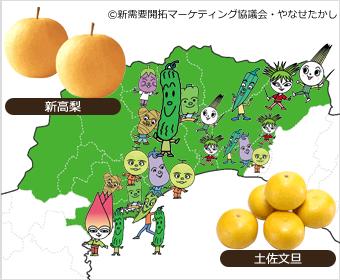 高知県中部エリア
