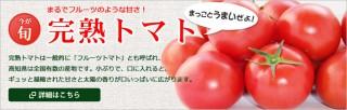 bnr_tomato