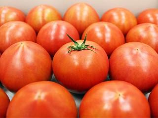 veg_tomato02